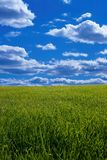 Sky and meadow Royalty Free Stock Photography