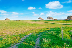 Sky and meadow Royalty Free Stock Photos