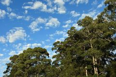 Sky meeting the treeline stock photography