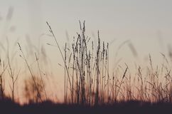 Sky, Morning, Grass, Grass Family Royalty Free Stock Images