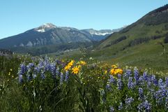 Sky mountain and flowers. High mountain flower meadow stock image