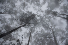 Sky of Mysterious Foggy Forest Royalty Free Stock Photo