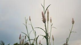 sky natural plants royalty free stock photo