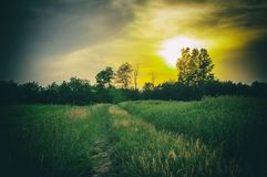 Sky, Nature, Green, Field stock image