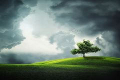 Sky, Nature, Green, Tree Royalty Free Stock Photography