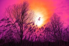 Sky, Nature, Pink, Branch royalty free stock photos