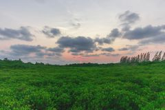 Sky Nature. Sky Sunset Nature in Rayong Thailand Royalty Free Stock Photo