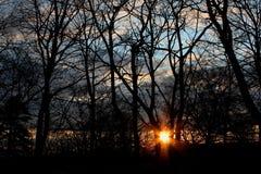 Sky, Nature, Tree, Branch royalty free stock photo