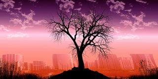 Sky, Nature, Tree, Dawn royalty free stock photos