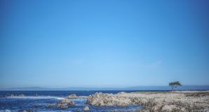 Single tree stands on the rock under pure blue sky royalty free stock photo
