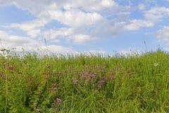 Sky och gräs Royaltyfria Bilder