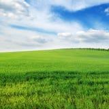 sky och grönt fält Arkivfoton