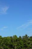 Sky- och treebakgrund arkivfoton