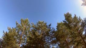 Sky och Trees stock video