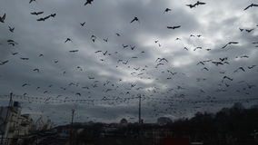 The sky of Odessa, filled with birds Stock Images