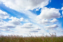 Sky over marsh Royalty Free Stock Images