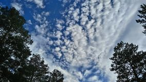 The sky over the pine forest, after noon. stock photos