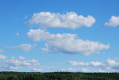 Sky over the tree tops. Blue sky with fluffy clouds over the tree tops Royalty Free Stock Photos
