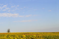 Sky over the wineyards. Blue sky over the wineyards, Germany Stock Photography