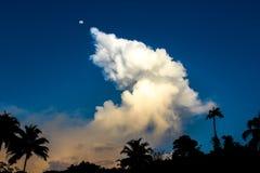 Jungle sky, Luna estrellada stock photos