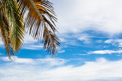 Sky and palm Royalty Free Stock Images