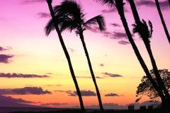 Sky, Palm Tree, Sunset, Arecales Stock Photos
