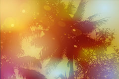 Sky, palm trees, sunset, sun glare. Vector Royalty Free Stock Photos
