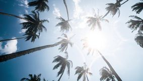 Sky Palms Wind Tropics Timelapse 4k. Timelapse of some palm trees in Sri Lanka. 4k footage stock video footage
