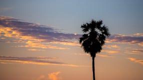 Sky pastel color palm tree Royalty Free Stock Photo