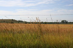 Sky pasture Royalty Free Stock Photo