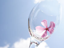 Sky Petal. A flower in a wine glass Royalty Free Stock Photography