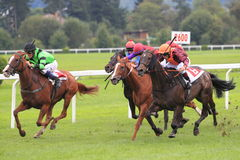 Sky pilot - horse racing in Prague Royalty Free Stock Images
