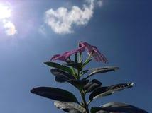 Sky, Pink, Flora, Plant stock photos