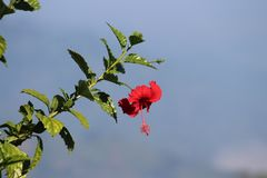 Sky, Plant, Flower, Flora Royalty Free Stock Images