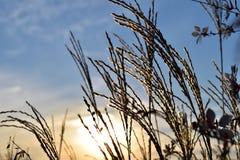 Sky, Plant, Grass Family, Branch