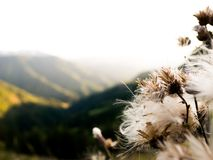 Sky, Plant, Tree, Flower Stock Photography