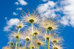 Sky plants. Plants growing up and into the sky Stock Photos