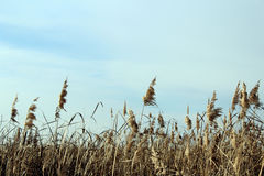 Sky, plants Stock Image