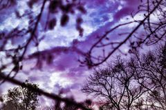 Sky with purple clouds looked at through dead branches royalty free stock photo