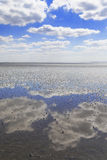 Sky reflected in Watt. Watt at low tide, low tide on the North Sea coast in the summer Stock Images