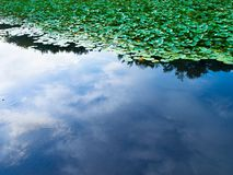 Sky reflecting on a pond with lily pad Royalty Free Stock Images