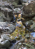 Sky Reflection in an Adirondack Mountain Brook Royalty Free Stock Photos