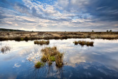 Sky reflections in swamp water Royalty Free Stock Photos