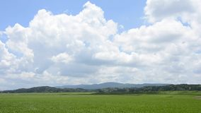 Sky and rice field Stock Photo