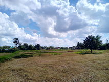 Sky and rice fields Royalty Free Stock Photo