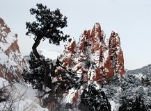 Sky rock tree. Snow day in colorado royalty free stock images