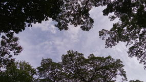 Sky`s Frame. A picture of trees on a park forming like a frame of the sky Royalty Free Stock Photos