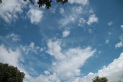The sky is scattered. The photos are taken through the top of the tree and the skies are visible Stock Photo