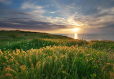 Sky, sea, and green grass. Royalty Free Stock Images