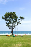 Sky Sea Park and the Tree. Swing hang on the big tree in park near the sea Royalty Free Stock Photography